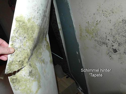 Sehr Verdeckter Schimmelpilzbefall - Niemeyer Sachverständigenbüro ZG88